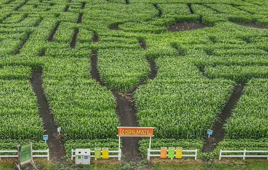 edmonton-corn-maze